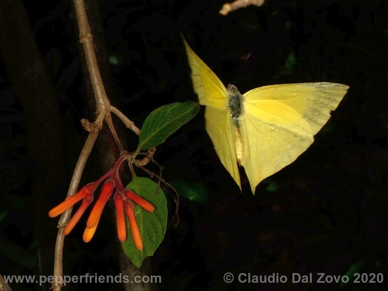 farfalla.jpg