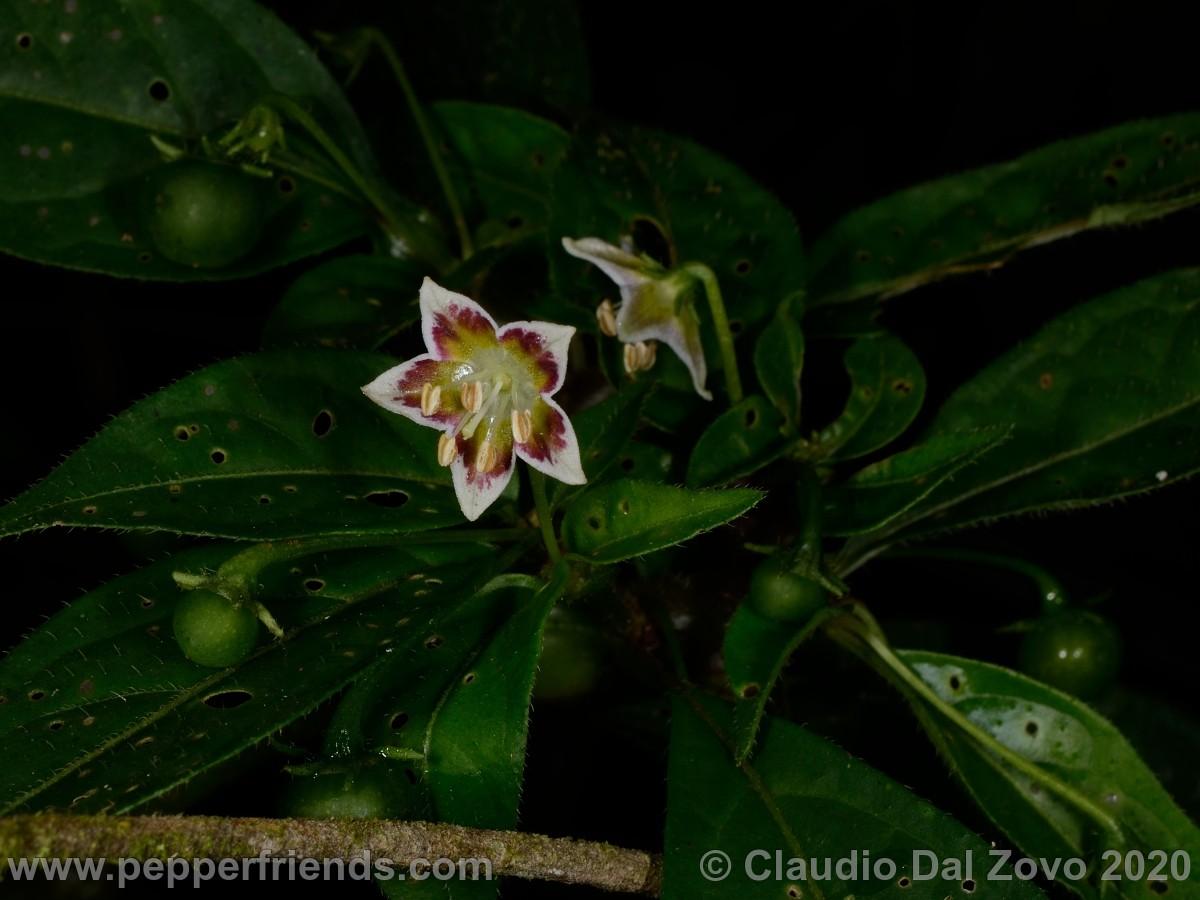 buforum_intermedia-fiori-frutti_01.jpg