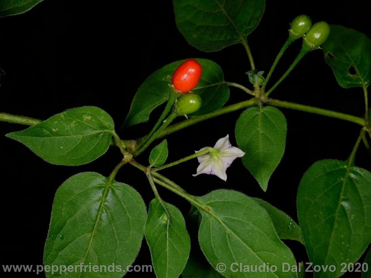 praetermissum_foglie-fiore-frutti_01.jpg