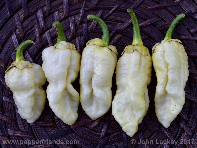 7pod-bubblegum-white_001_frutto_10.jpg