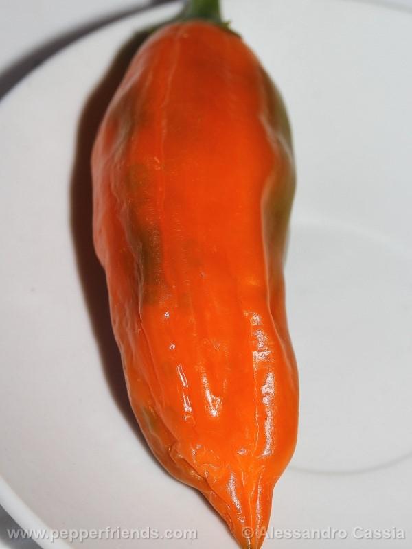 aji-amarillo_002_frutto_02.jpg