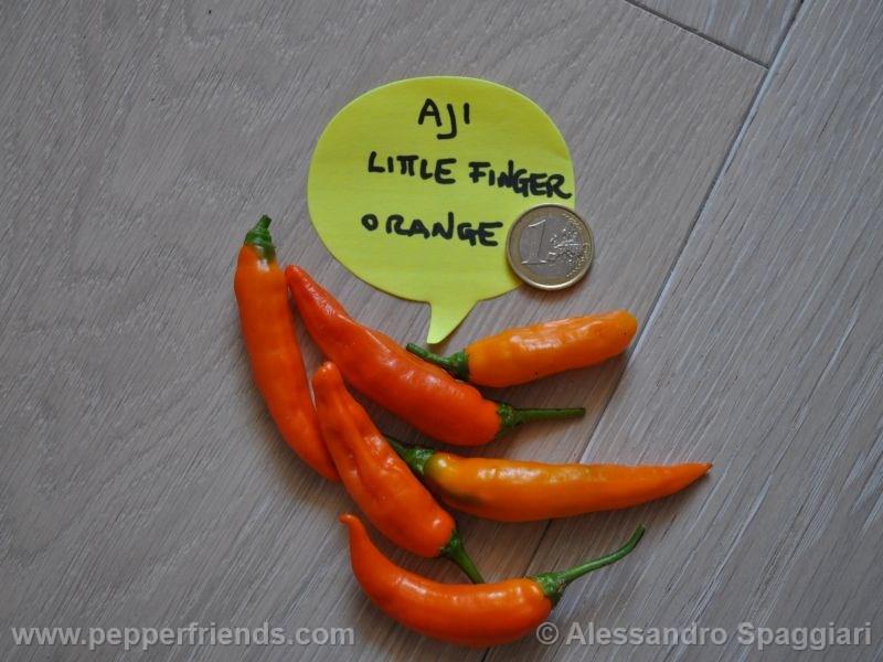 aji-little-finger-orange_001_frutto_02.j