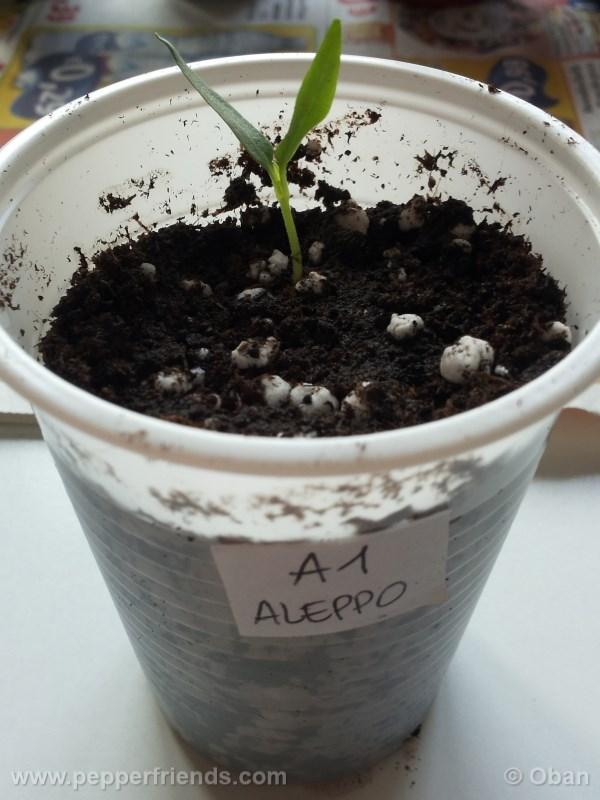 aleppo_001_pianta_02.jpg