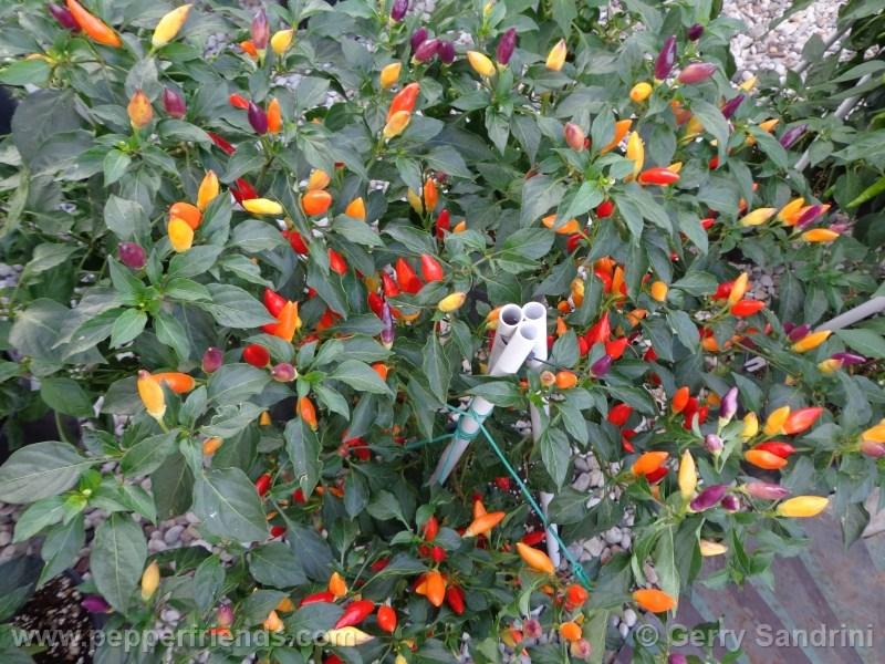 arcobaleno_001_pianta_04.jpg