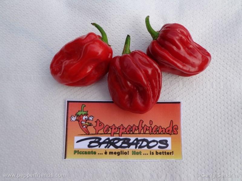 barbados_001_frutto_02.jpg