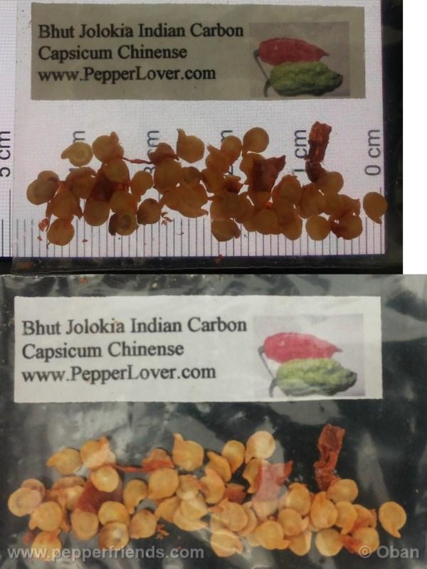 bhut-indian-carbon_001_asemi_01.jpg
