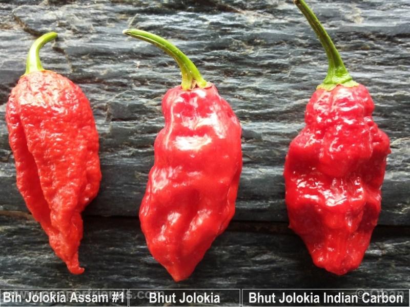 bhut-indian-carbon_001_x_15.jpg