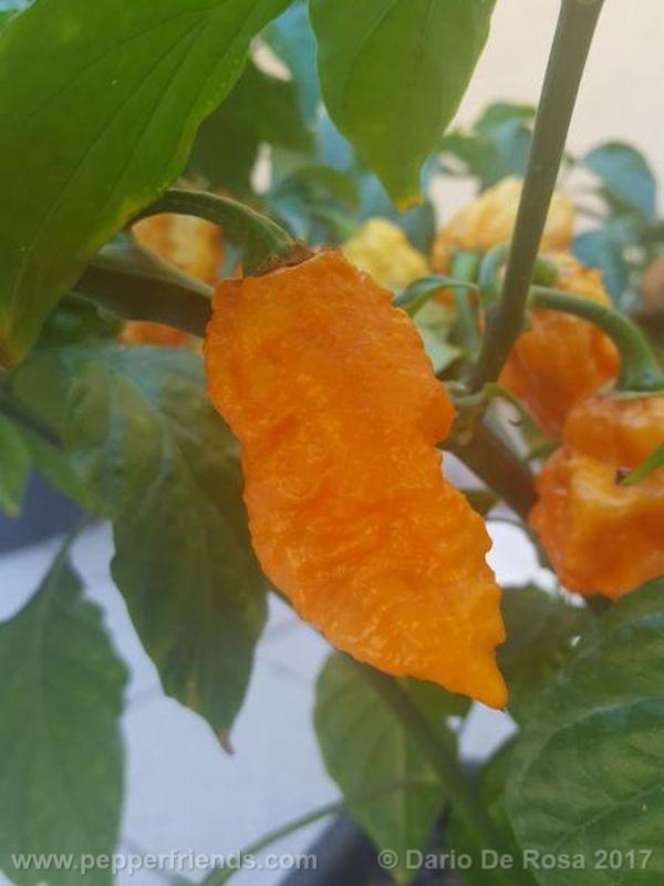 bhut-orange-copenaghen_001_frutto_05.jpg