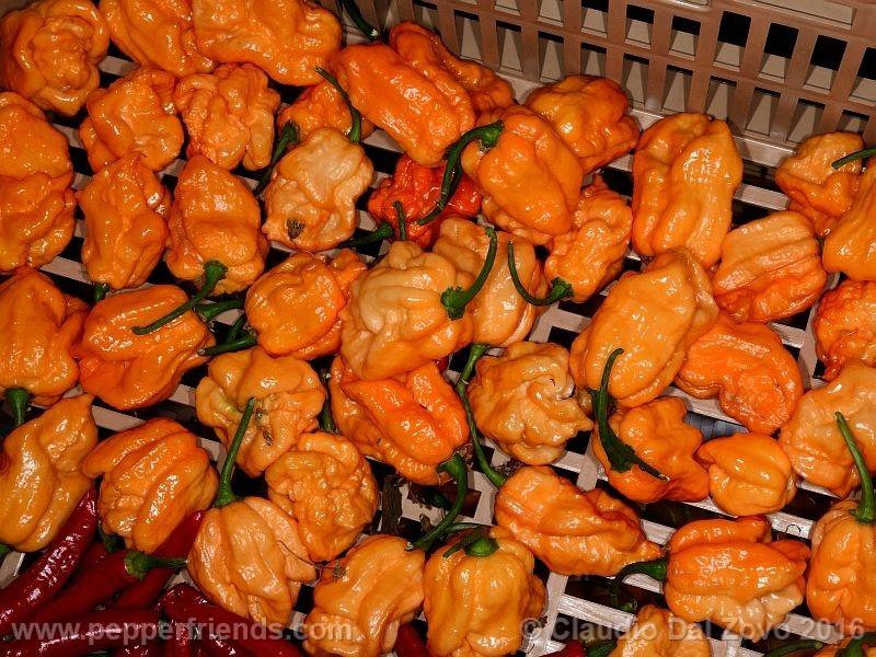 bhut-orange-copenaghen_001_frutto_10.jpg