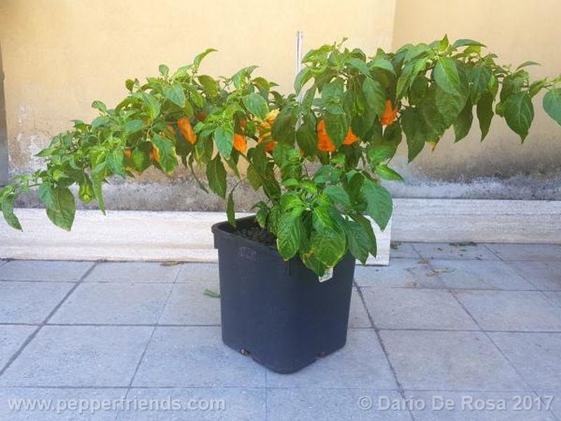bhut-orange-copenaghen_001_pianta_06.jpg