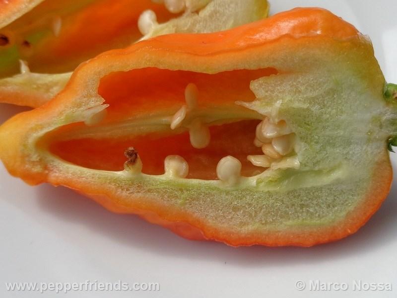 bhutjolokia-strain2_001_frutto_06.jpg