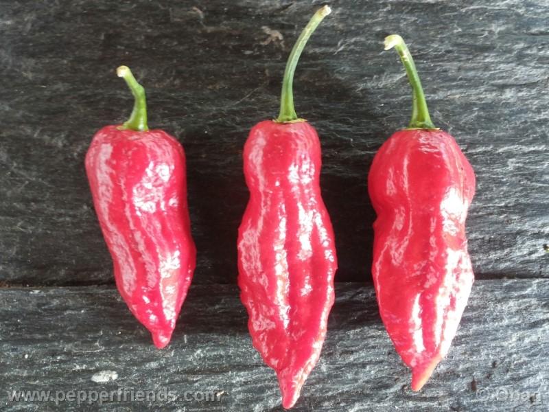 bhutjolokia-strain2_003_frutto_31.jpg