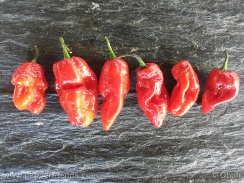bhutlah-red_001_frutto_26.jpg