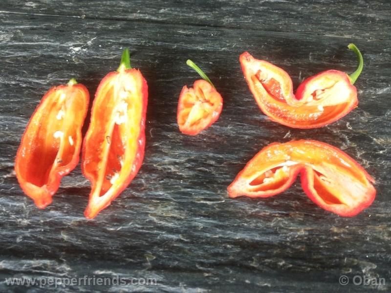 bhutlah-red_001_frutto_27.jpg