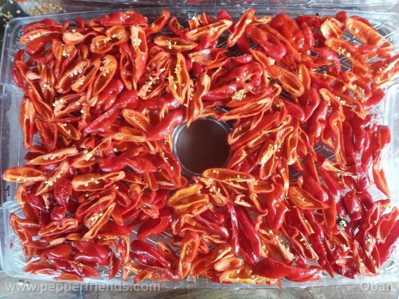 bhutlah-red_001_frutto_32.jpg