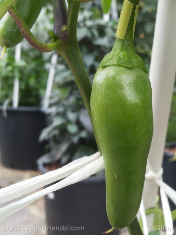 bobs-pickling_001_frutto_06.jpg