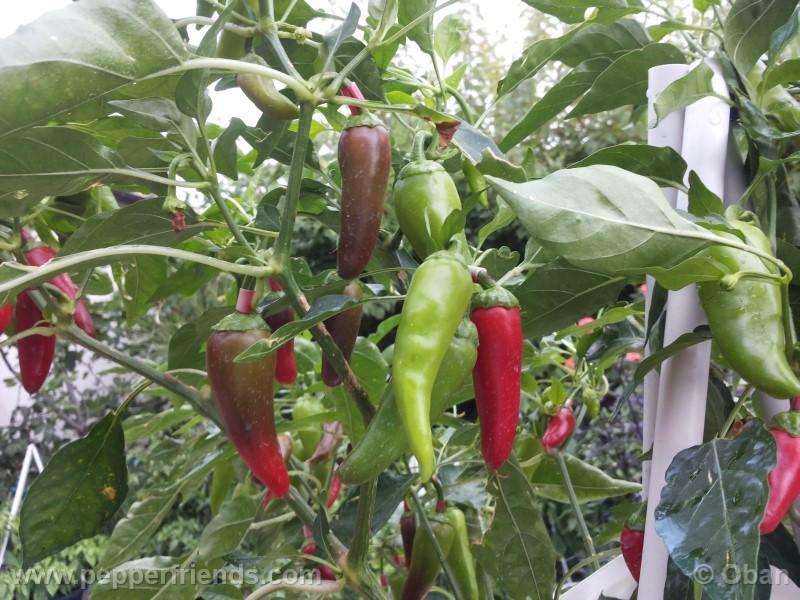 bobs-pickling_001_frutto_14.jpg