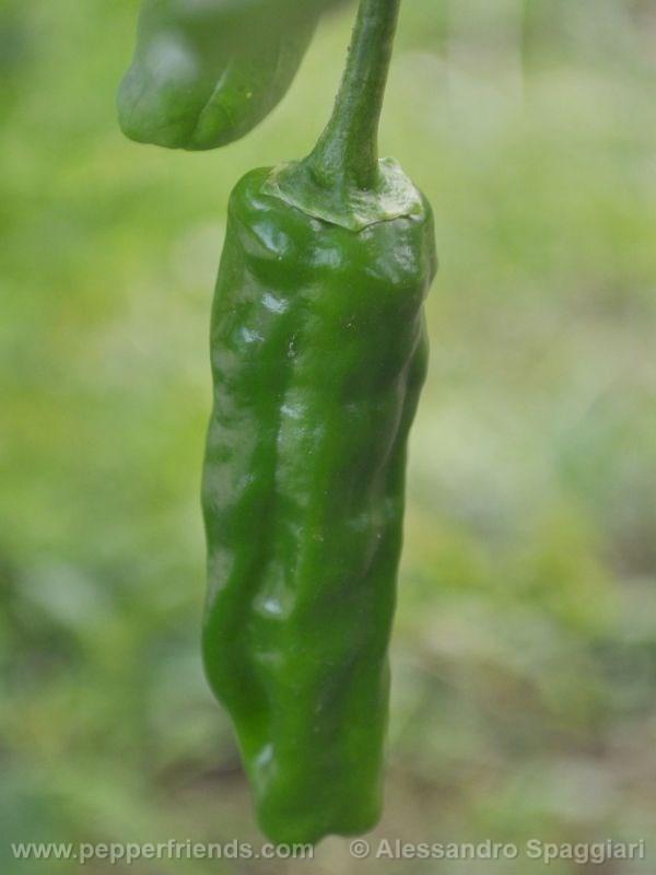brome-pepper_001_frutto_01.jpg