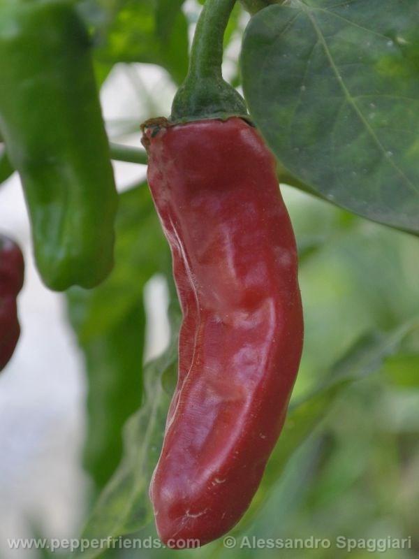 brome-pepper_001_frutto_02.jpg