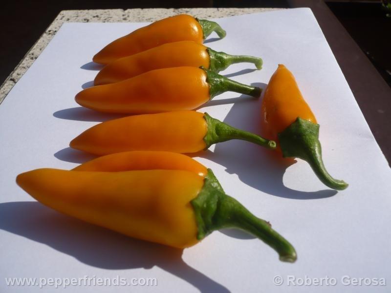 bulgarian-carrot_001_frutto_05.jpg