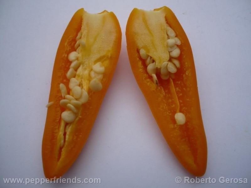 bulgarian-carrot_001_frutto_08.jpg