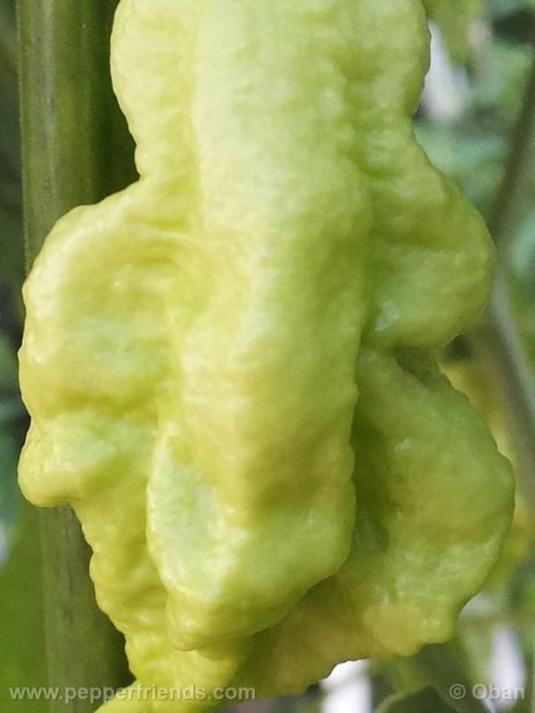 jay-peach-ghost-scorpion_004_frutto_10.j