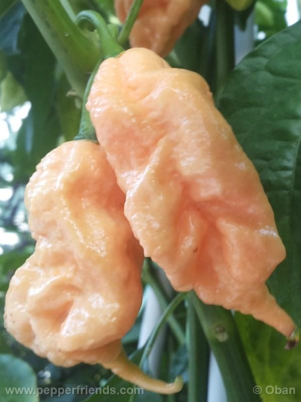 jay-peach-ghost-scorpion_004_frutto_14.j