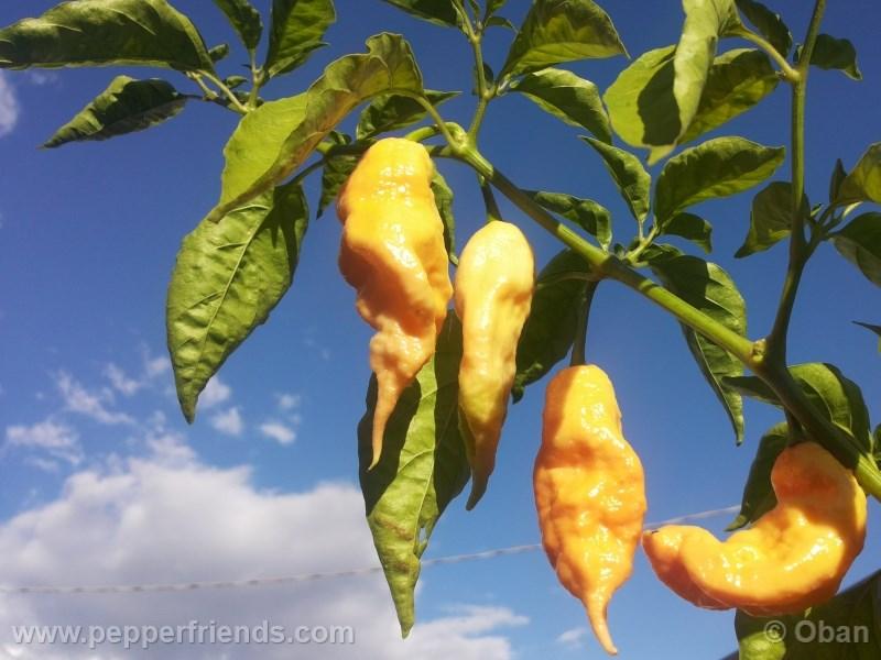jay-peach-ghost-scorpion_004_pianta_15.j