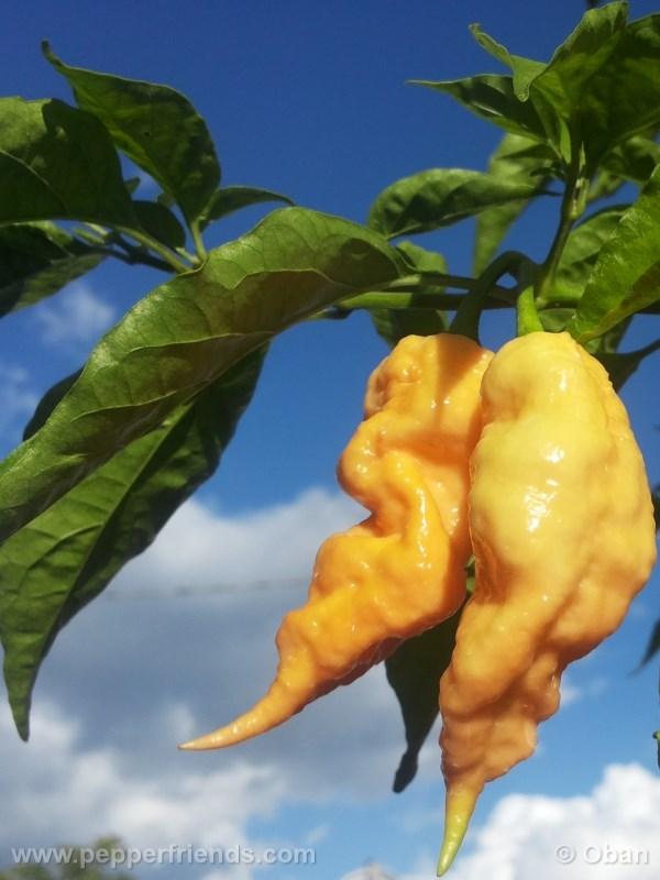 jay-peach-ghost-scorpion_004_pianta_16.j