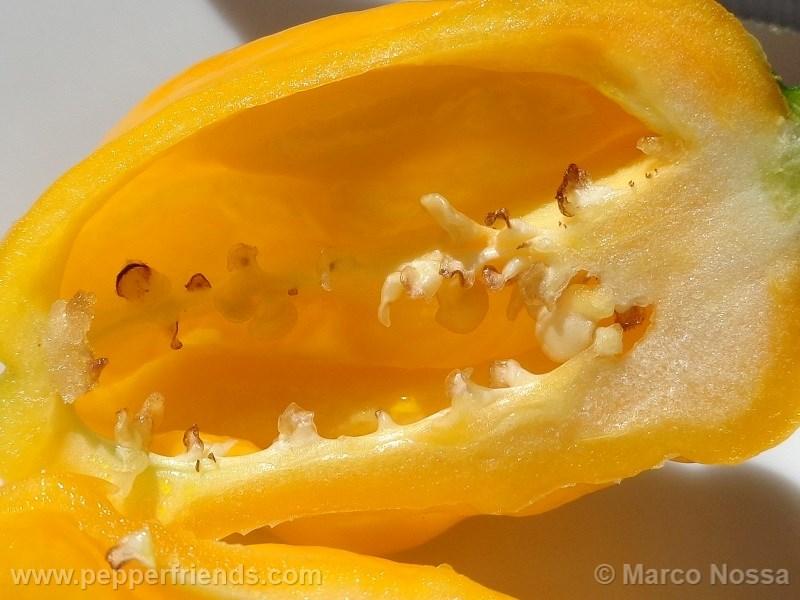 morovar-yellow_002_frutto_10.jpg