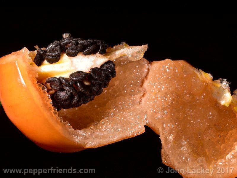 orange-rocoto_001_frutto_10.jpg