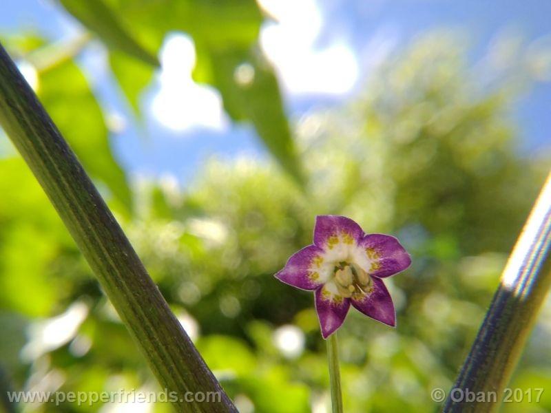 pepperlover_003_fiore_08.jpg