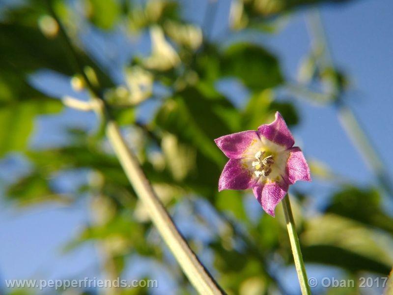 pepperlover_003_fiore_18.jpg