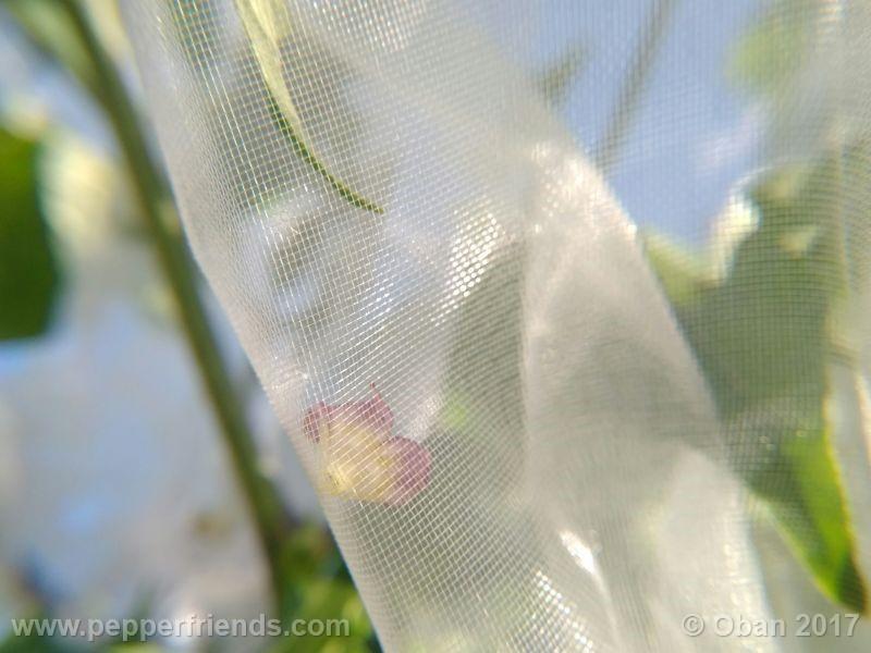 pepperlover_003_fiore_19.jpg