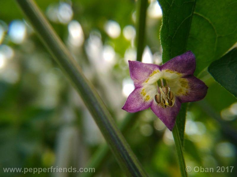 pepperlover_003_fiore_23.jpg