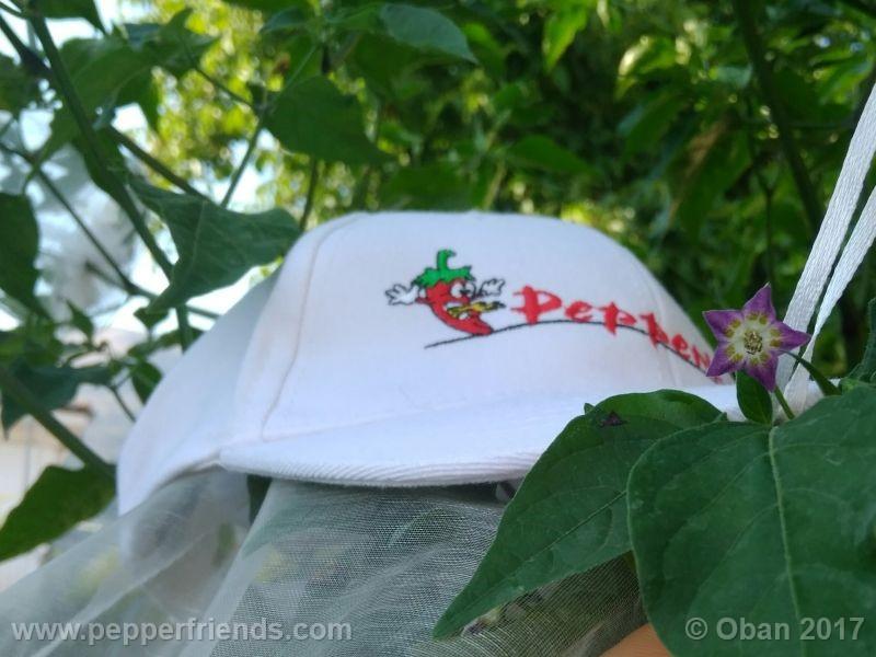 pepperlover_003_fiore_50.jpg
