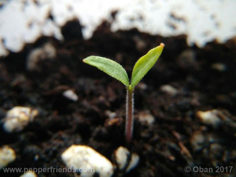 pepperlover_003_pianta_03.jpg