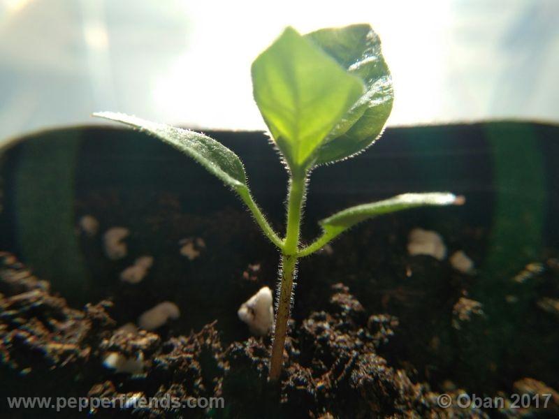 pepperlover_003_pianta_05.jpg
