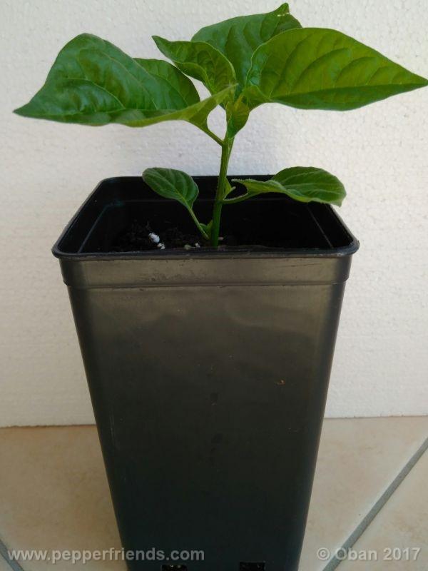 pepperlover_003_pianta_12.jpg