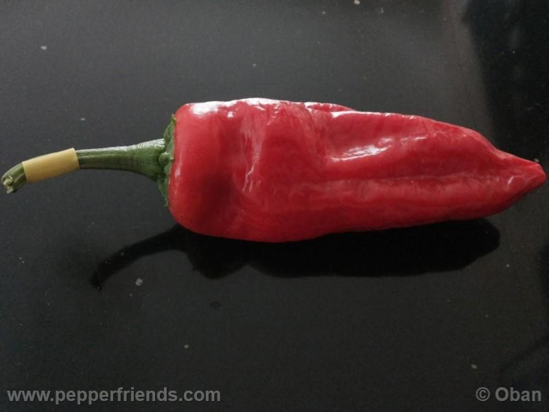 pimenta-de-padron_001_frutto_12.jpg