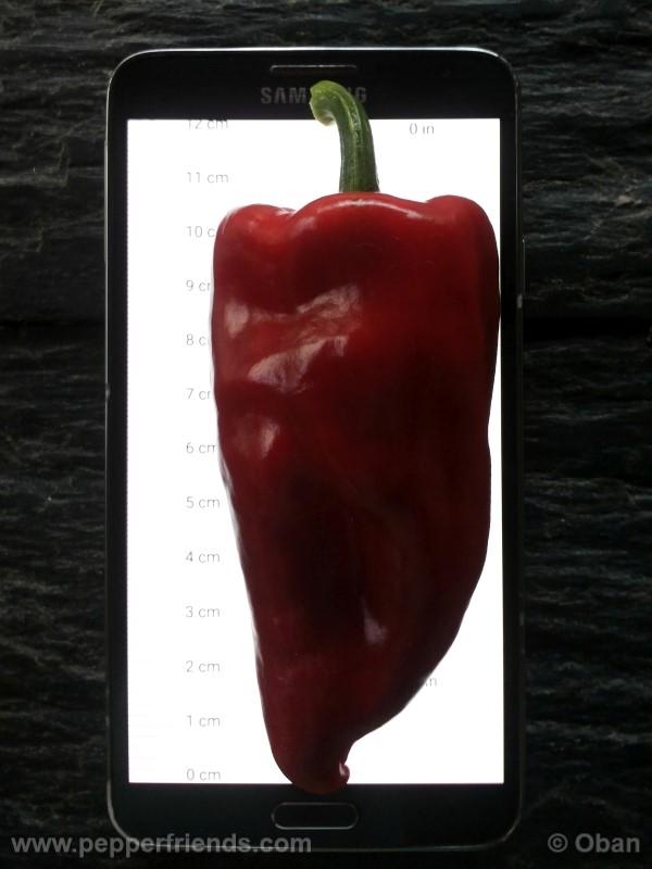 pimenta-de-padron_001_frutto_19.jpg