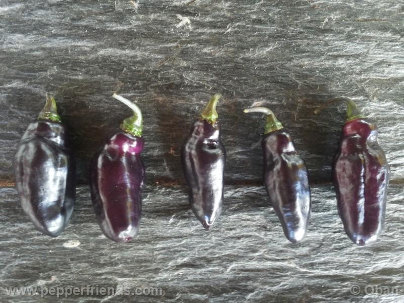 pimenta-da-neyde_005_frutto_02.jpg