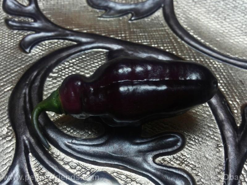 pimenta-da-neyde_005_frutto_03.jpg
