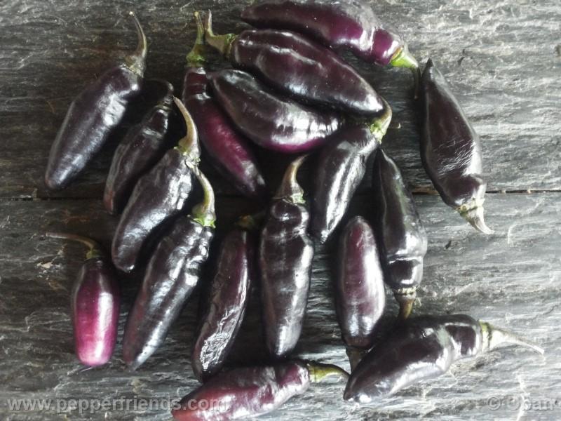 pimenta-da-neyde_005_frutto_12.jpg