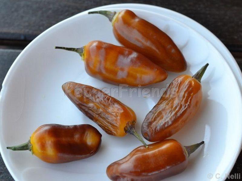 pimenta-puma_001_frutto_03.jpg