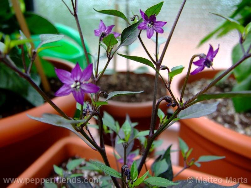 violetta_001_pianta_02.jpg