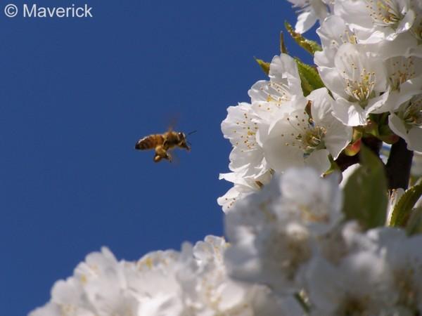 Api&Dintorni - Alla scoperta del mondo delle api