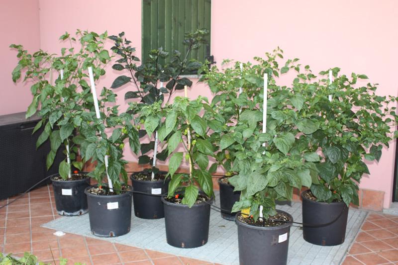 20120704 Panoramica patio lato nord