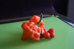 20140813 Orange Blob E Chupetinho (3)