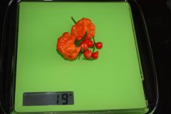 20140813 Orange Blob E Chupetinho (2)